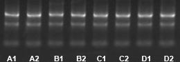 TRIzol Reagent提取RNA