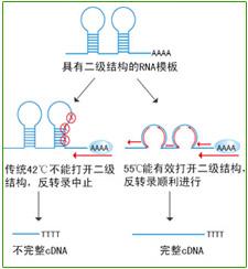 MLV反转录酶
