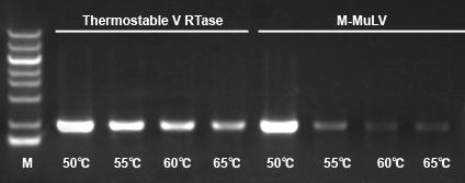 耐热反转录酶