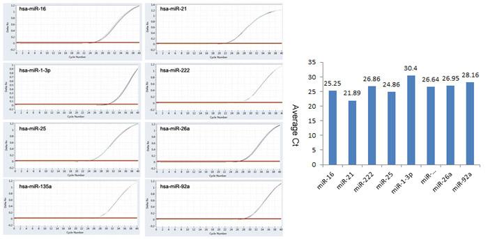血清血浆miRNA定量PCR