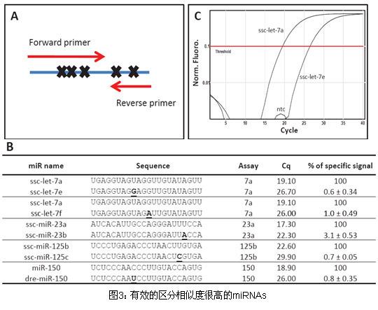 miRNA荧光定量PCR试剂盒