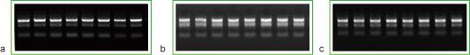 快速RNA提取试剂盒