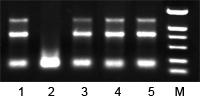 RNase抑制剂