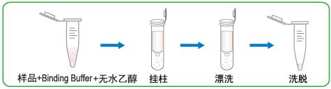 5minRNA纯化试剂盒