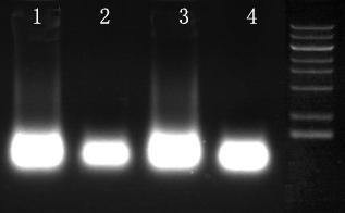 快速RNA纯化试剂盒