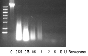 benzonase核酸酶消化DNA