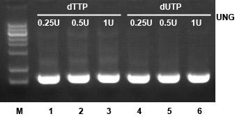 UNG酶性能测试