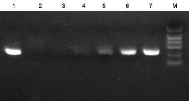 UNG酶活性测试