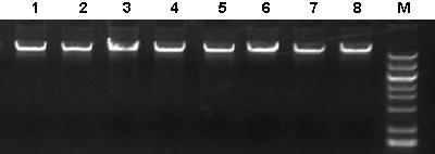 DNA提取试剂盒