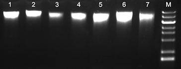 植物DNA提取试剂盒