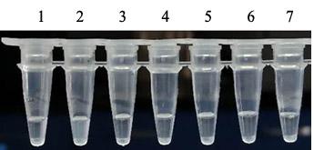 热稳定无机焦磷酸酶